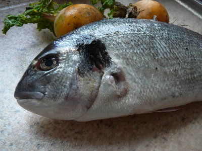 Black bream before baking