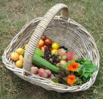 Wicker basket with freshly picked produce on the ground